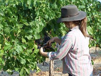 Trudy Davis in the vineyard